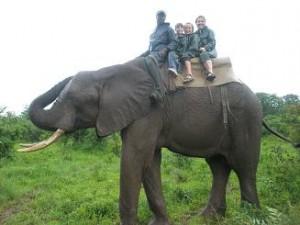 Zimbabwe_ElephantRide